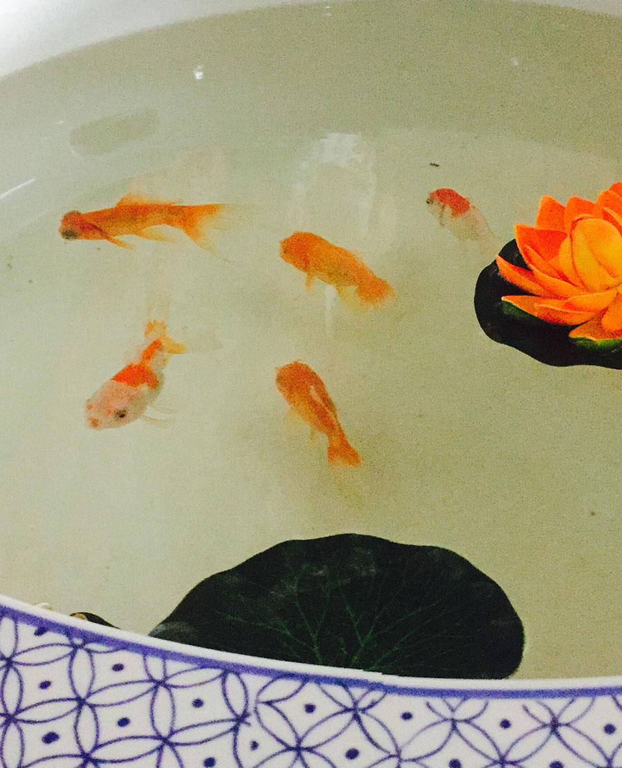 Gold fish and blue patterned bowl.