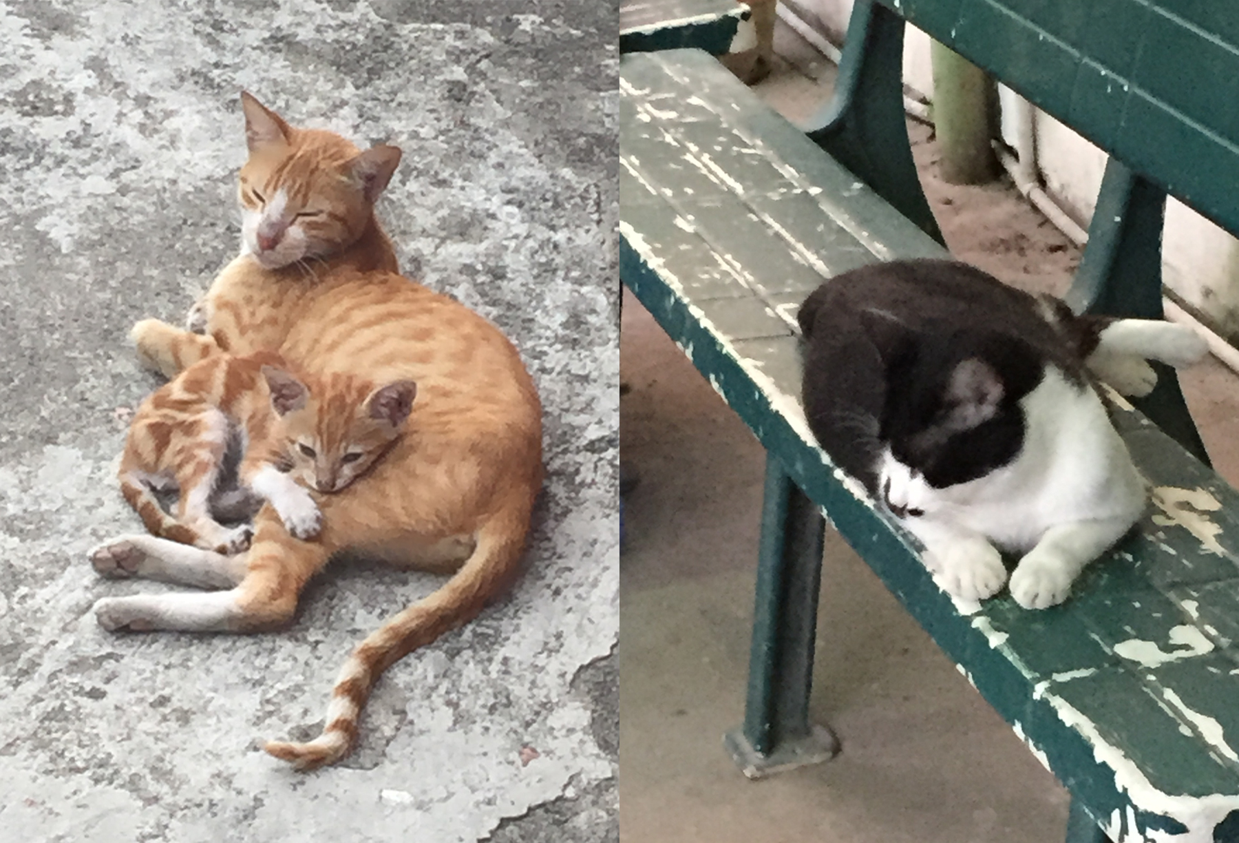 kitties in asia