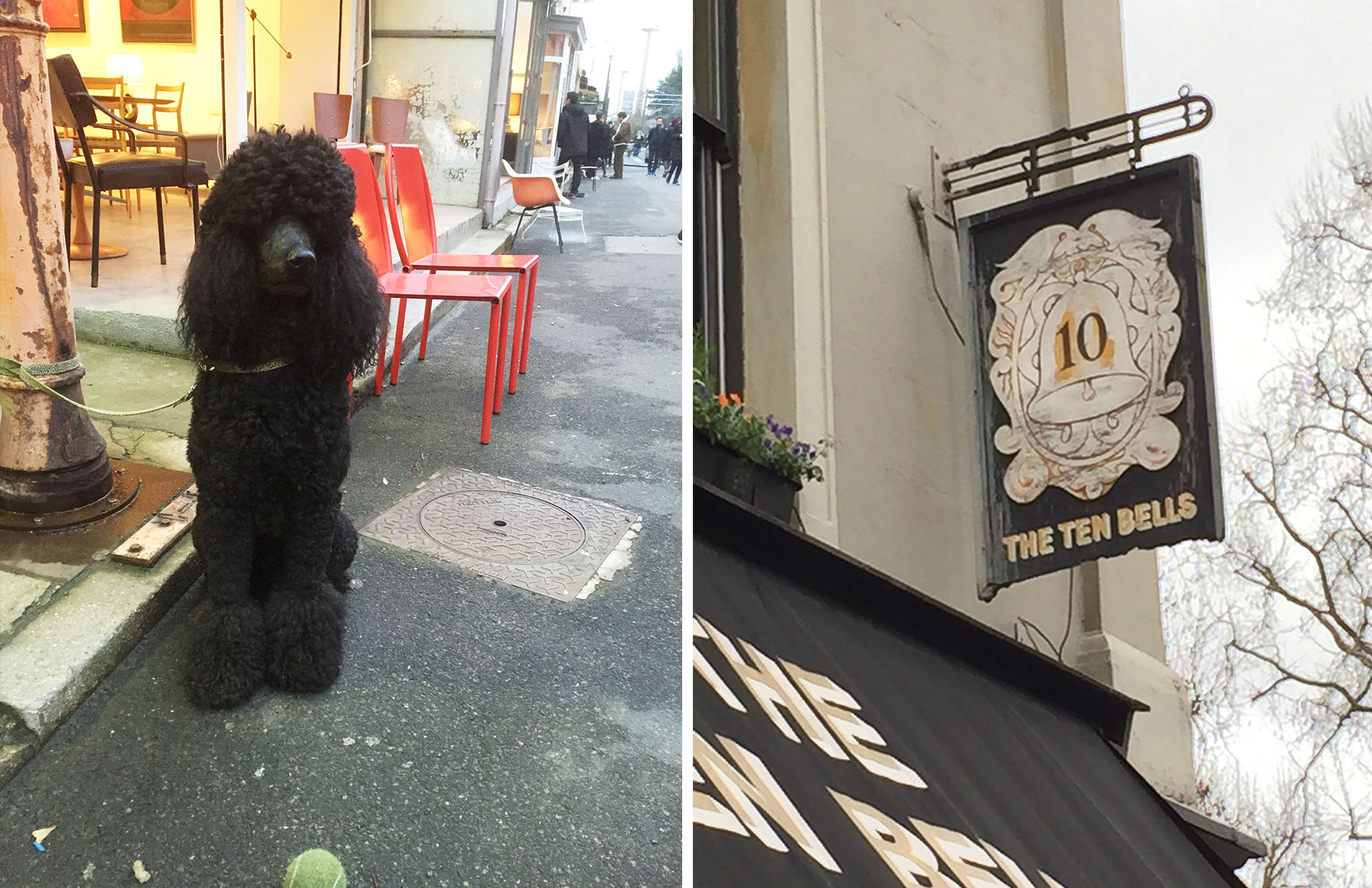 poodle and french sign