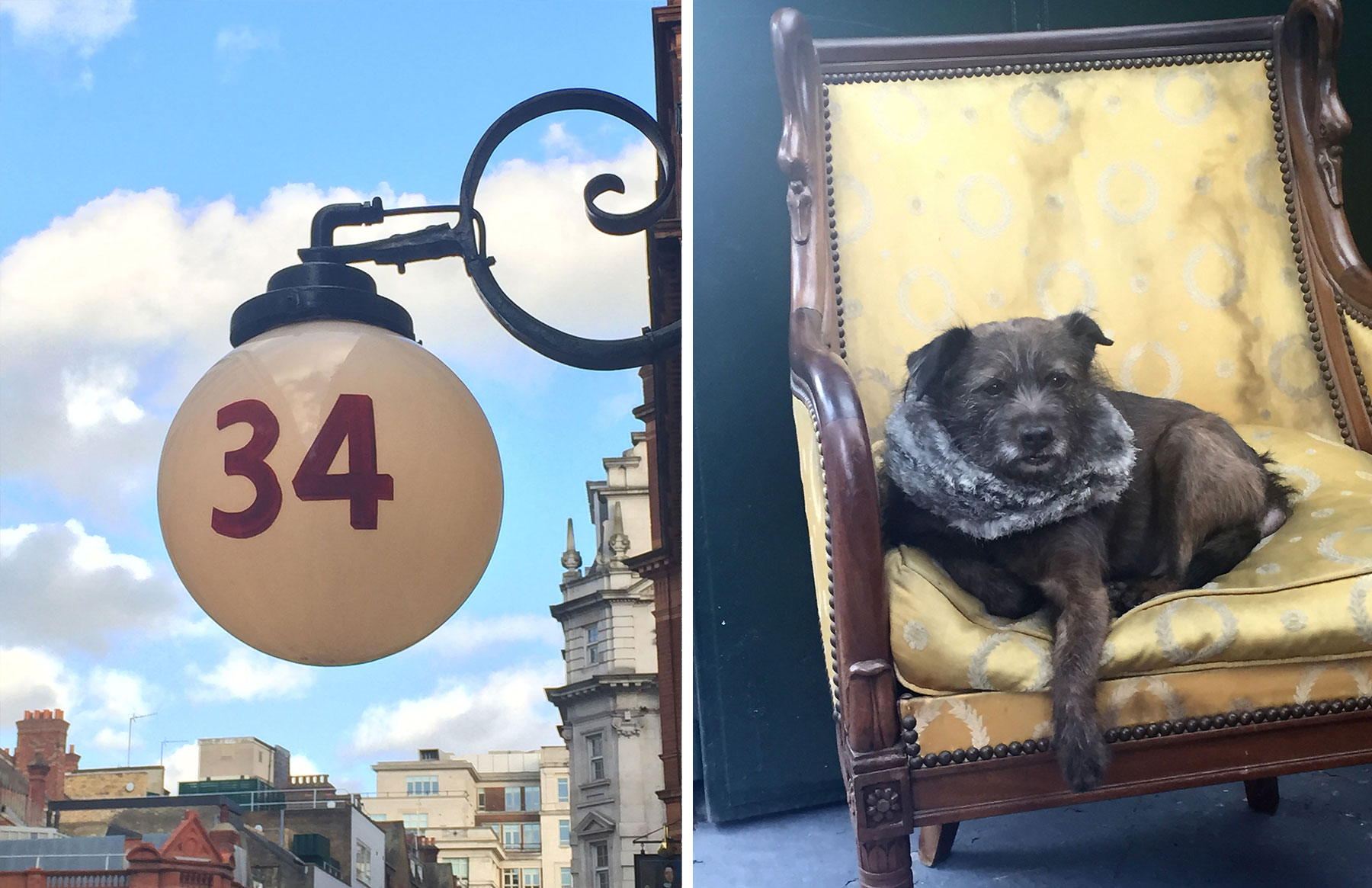 handsome dog in chair