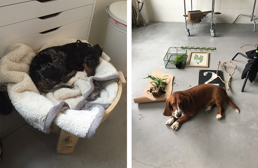 dogs_in_the_office