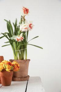 ruffled planter