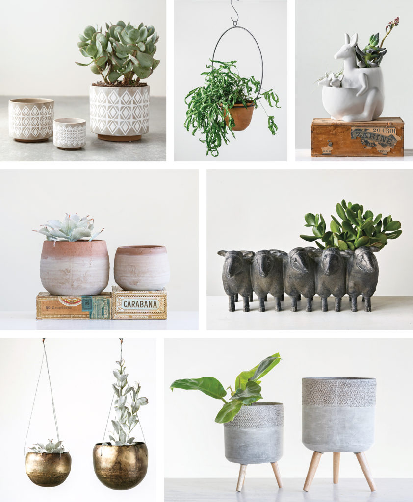Indoor Plants – Containers